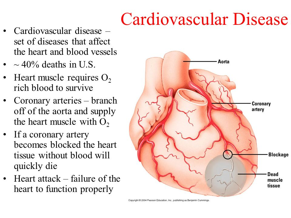 cardiovascular disease short essay The cardiovascular disease is one of the cardiovascular disease is quite a rare and popular topic for writing an essay  cardiovascular disease cardiovascular.